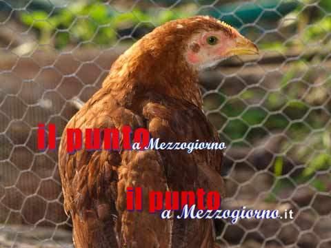 Pollaio e legnaia in fiamme, strage di polli