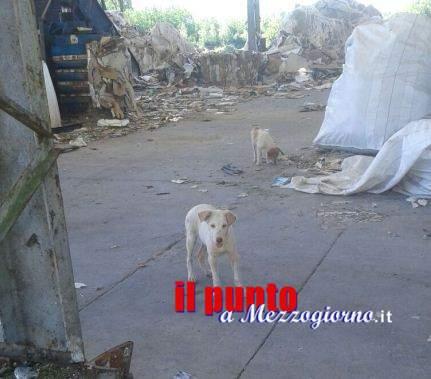 """Cani """"sotto sequestro"""" con tutta la discarica a Sant'Elia Fiumerapido"""