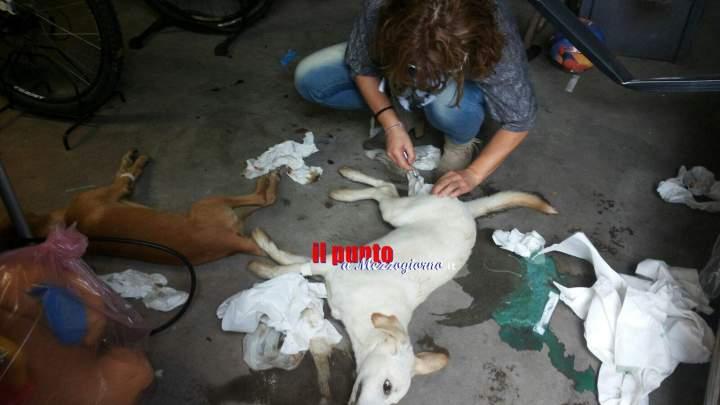 Strage di cani a Sant'Apollinare, allarme avvelenamenti