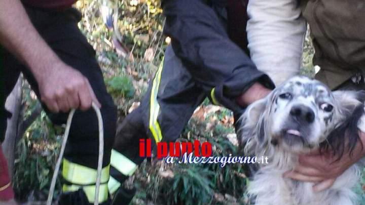Cane finisce nel pozzo a Maenza, salvato dai vigili del fuoco