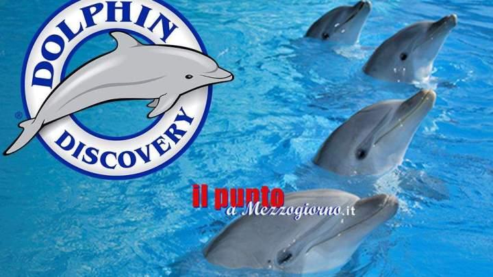 La multinazionale DolphinDiscovery acquista lo Zoomarine di Pomezia