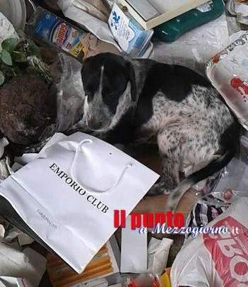 Gettano il cane vivo in discarica come fosse un rifiuto, lo salva l'Anpana