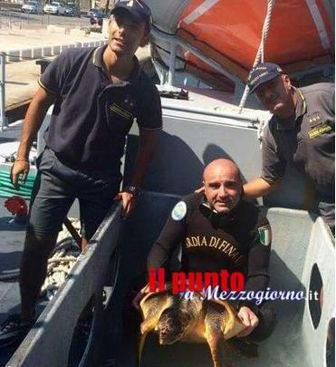 """Tartaruga Caretta Caretta salvata dall'equipaggio della nave scuola """"Mazzei"""""""