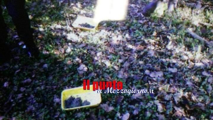 5 kg di carne avvelenata destinata ai cani da tartufi scoperta dalla Polizia Provinciale a Frosinone