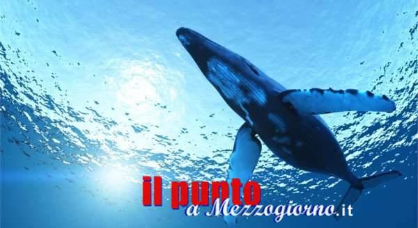 Blu whale: tra rischi e bufale on line – 3 fine
