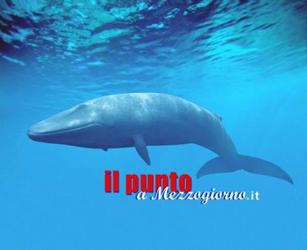 Blu Whale: come avviene il suicidio e la diffusione – 2 –