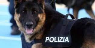 Frosinone: casalinga nascondeva hashish nell'aspirapolvere, scoperta da cane poliziotto