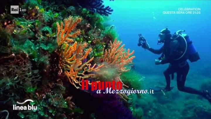 La Gorgonia Gialla fotografata ad Anzio sulla secca di Castacuti