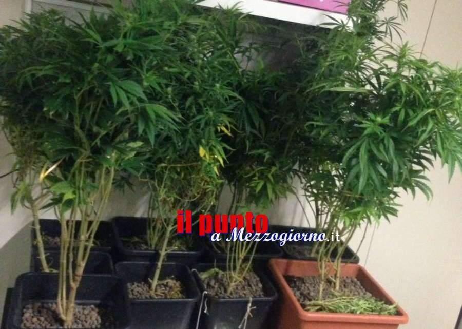 Narcoagricoltore in corso Trieste, ventenne trovato con 10 piante di marijuana nella cameretta