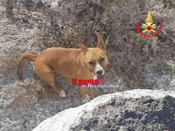 cane salvato a ponza1