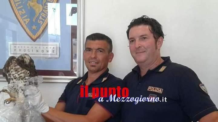 Rapace investito sull'A1, soccorso e salvato dagli agenti della Polstrada a Frosinone