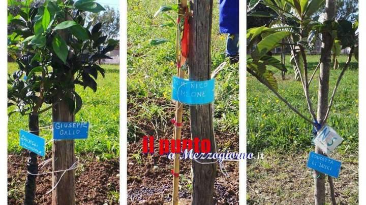 Festa dell'albero all'istituto comprensivo Pollione di Penitro