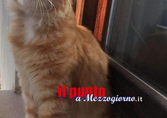 """Tragedia di Natale a Velletri, il figlio della vittima dell'esplosione: """"Aiutateci a trovare il gatto e a ricostruire casa"""""""
