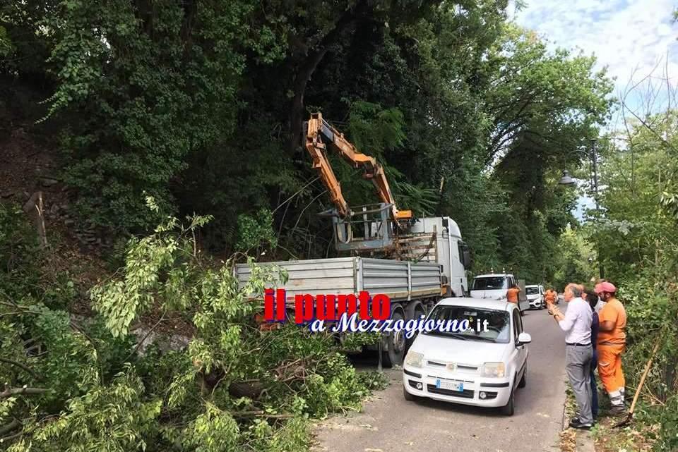 Cassino,taglio di alberi in via Pinchera riesplodono le polemiche. Edoardo Grossi plaude al provvedimento