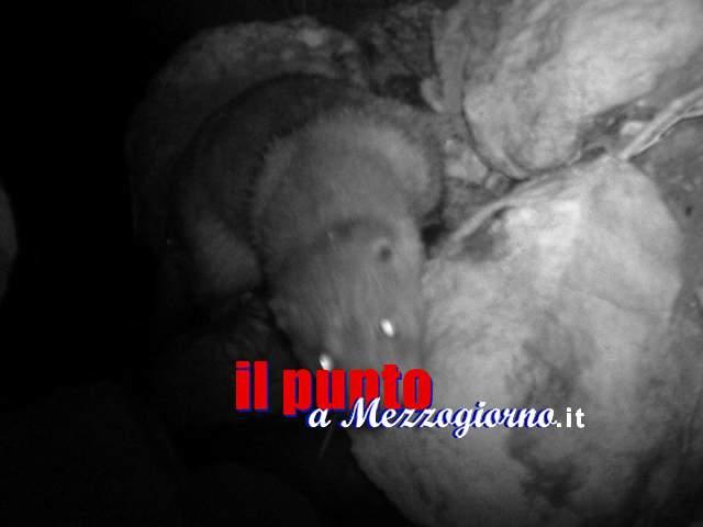 Le fototrappole 'catturano' la lontra confermandone la presenza sul Sangro