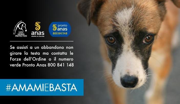 Incidenti stradali causati da cani e gatti abbandonati, parte la campagna estiva anti abbandono Lndc e Anas
