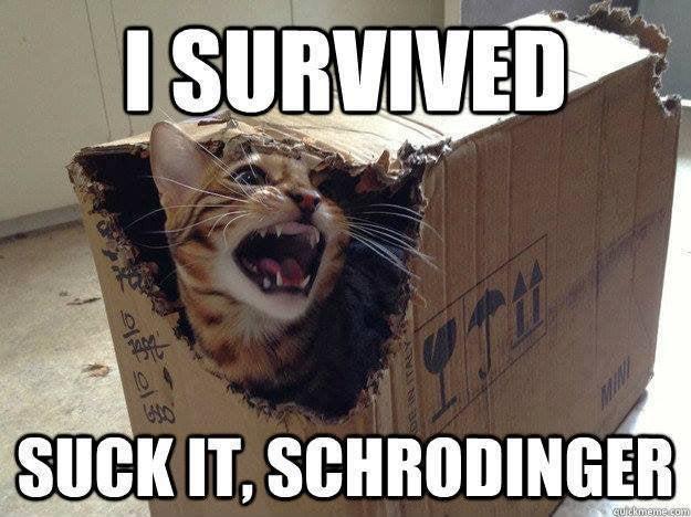 Gatto di Schrodinger vivo