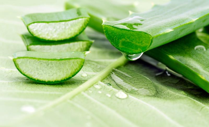 Cuscino Memory Foam e Aloe Vera Propriet e benefici
