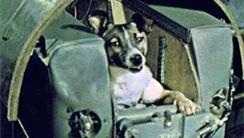 3 novembre 1957: l'inutile, terribile sacrificio di Laika