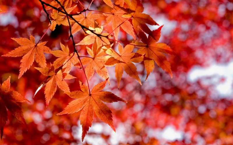 Noi come foglie: la fragilità umana da Omero a Malika Ayane