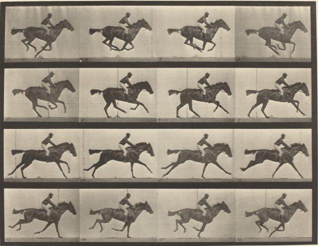 Il primo gruppo di foto chiare in cui viene mostrato i movimenti di un cavallo in corsa.