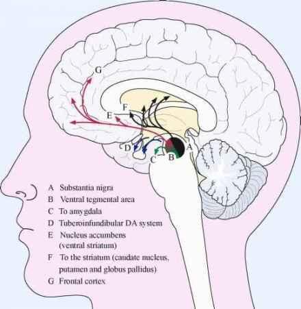 Sistema dopaminergico