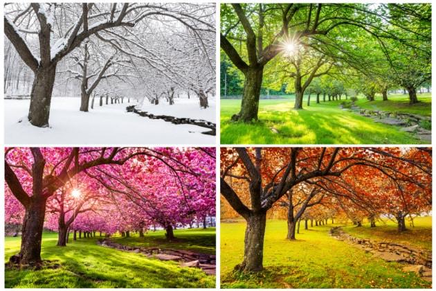 L'autunno è alle porte: perché si alternano le stagioni?