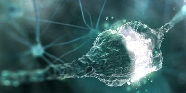 Il mondo delle sinapsi non smette di sorprendere: scoperto il ruolo di una proteina che regola la loro formazione