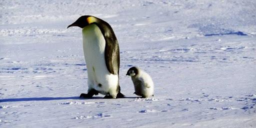 L'amore: un sentimento travolgente che accomuna Platone ed i pinguini australiani