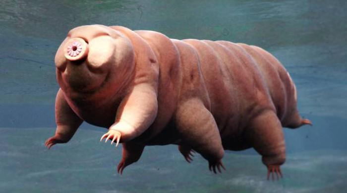 Focus sui tardigradi: non solo sono immortali ma sfruttano radiazioni UV per illuminarsi d'immenso