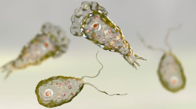 Può un protozoo farci diventare tutti degli zombie? Il caso di Naegleria fowleri