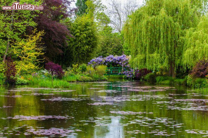 Il giardino dacqua di Casa Monet a Giverny   Foto