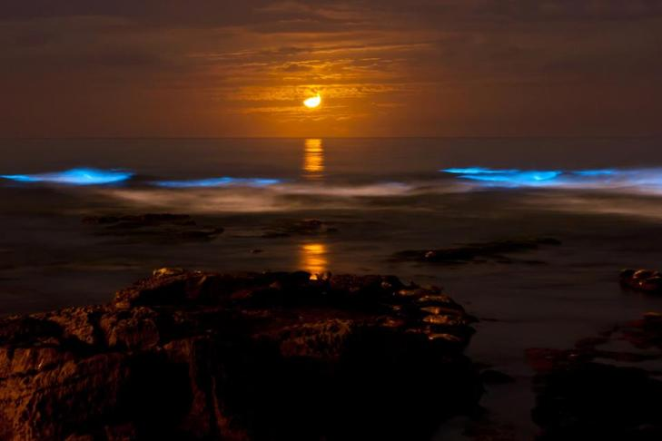 Bioluminiscencia luna