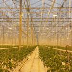 Plaguicidas de luz: iluminación al cuidado de las plantas