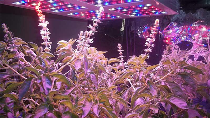 LEDs y horticultura Entre la eficiencia energtica y la