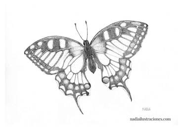 nadia-batalla-ilustraciones-05