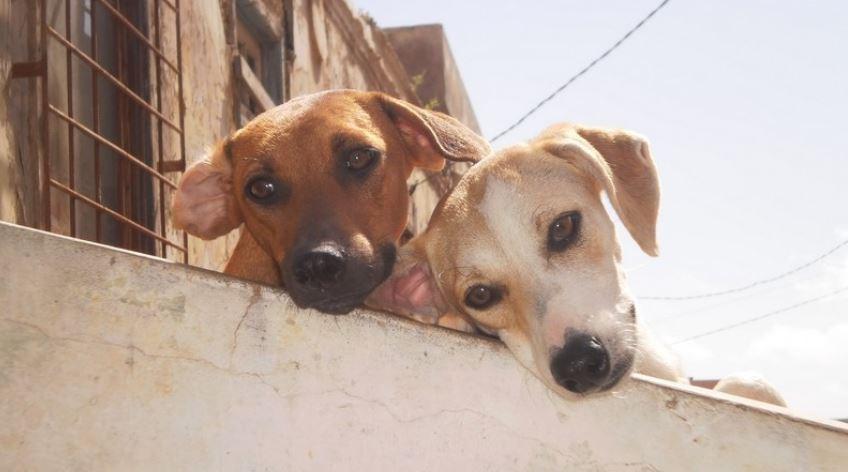 Adozione di un cane o di un gatto: cosa c'è da sapere - Ultime notizie  dall'Italia e dal mondo