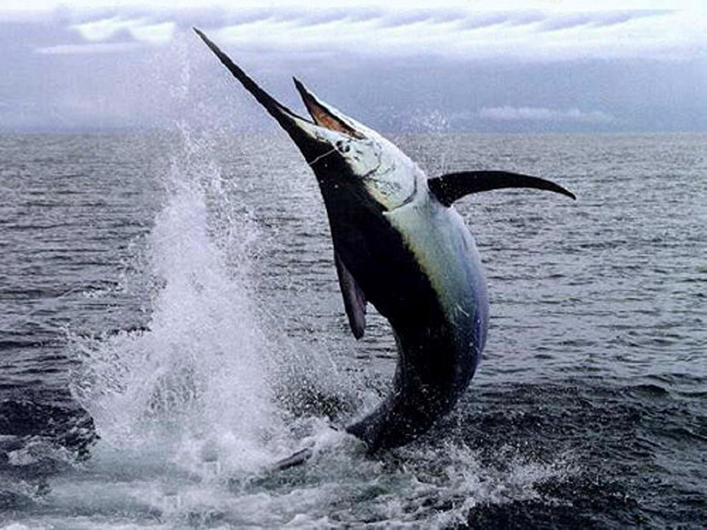 La Corte Ue respinge il ricorso dell'Italia sulle quote pesce spada