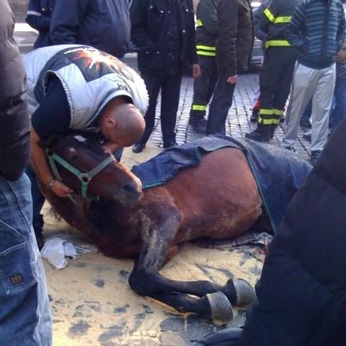 cavallo a terra, botticelle