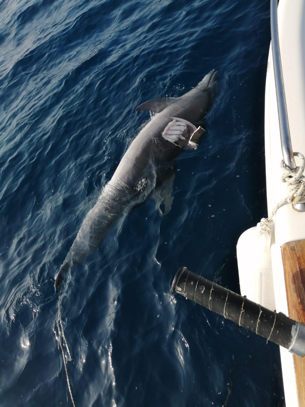 delfino morbillo causa morte
