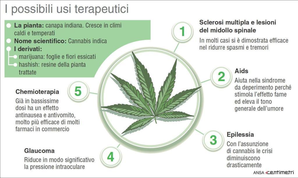 infografica cannabis, usi terapeutici