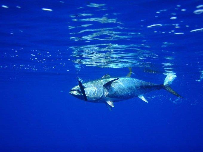 stop pesca adriatico