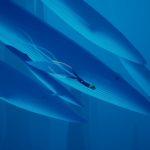 whaleride