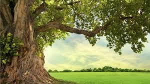 albero-serata