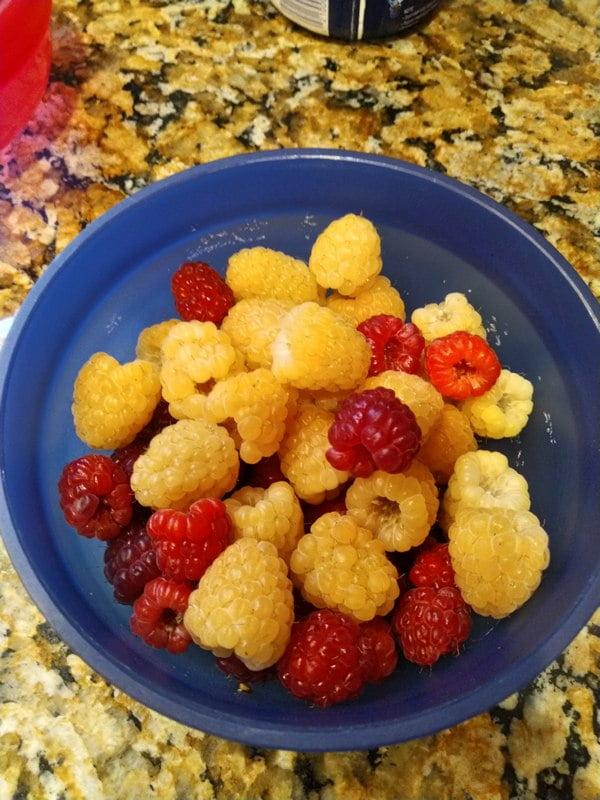 7/7/19 - mix of Anne and Joan J raspberries.