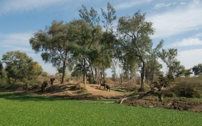 Olifant Mosi-oa-Tunya Victoria Falls Zambia