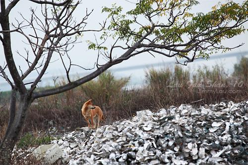 流浮山 - 蠔塚 - 香港好去處   香港攝影景點 - ImageJoy