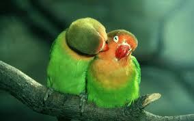 imagenes de animales enamorados-4