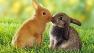 imagenes de animales enamorados-3