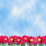 Imgenes primavera (102)